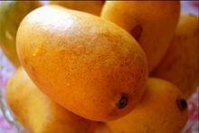 Mango exporter india