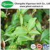 Organic green tea extract/green tea extract powder/green tea prices in india