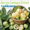 Hydroxy Citric Acid / HCA , Garcinia Cambogia Extract