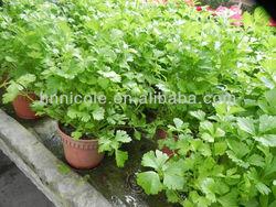 new soil fertilizer design home garden potting soil