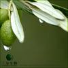 Useful Olive leaf Extract Powder Oleuropein Powder Form