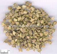 Puncturevine caltrop fruit nettle fruit puncture vine fruit cathead fruit