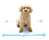 training pad tray for pets toilet mat for dogs pee pad tray handy items for pets