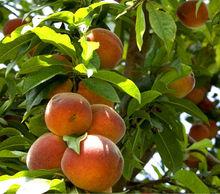 Fructiplus