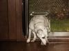 Sling Swing Acrylic Pet Dog Door 0051403201