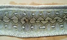 Snake Skins