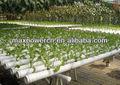 estufa agrícola hidropônico kit jardim