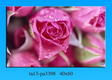 Photo red rose design landscape wall picture