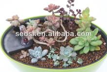 baking finish oval shape patio planters,garden pot,flower vases