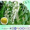 sophora japonica extract rutin powder