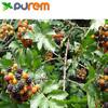 Black Raspberry Powder,Anthocyanidins