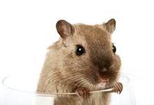Tele Net Ultrasonic Rodent Repeller