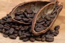 Trinitario Fine Flavored Cocoa Beans