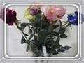 ราคาถูกสีม่วงเข้มกับกลิ่นหอมดอกกุหลาบ