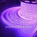 Cina ha portato luce striscia fornitore luce di striscia flessibile del led, ip67 dc12v striscia di led luce per i vestiti