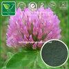 Red Clover Extract Isoflavones Powder