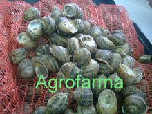 Snail, Lumache, Escargot, Caracoles