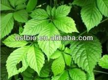 Gold Theragran P.E./Fiveleaf Gynostemma Herb/CAS No:80321-63-7