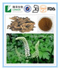 2.5-8% Triterpene Saponins Extract of Black Cohosh