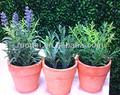 2014 Real toque mini grama artificial bonsai para decoração de casa