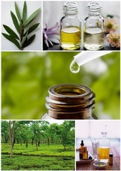 Private Label 100% Certified Natural n Pure Organic Tea Tree Essential oil From Australia