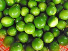 Best Seedless Lemon Layer, Lime, Lemon - Gimex Viet Nam