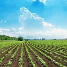 farm, agricultural land