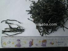Hot Sale Machine Dried sea kelp
