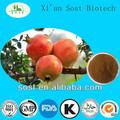 libre de la muestra de productos de belleza de frutas en polvo extracto de la granada