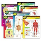 Human Anatomical Charts - UNDERSTANDING VIRAL INFECTIONS