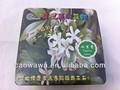 Ispirato mini bonsai, la magia di fiori e piante, ispirazione piante