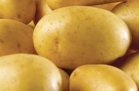 Fresh Potato - High Quality 2014 Harvest Season
