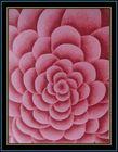 100% Wool acrylic flower floor rug handmade modern wool handmade carpet