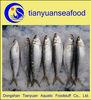 Grade A sardines fish