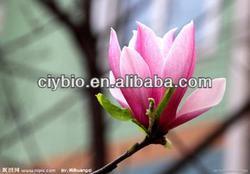 calmness:Yulan Magnolia Flower Bud Extract