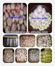 Shandong Garlic Product Exporte to Dubai 10kg/Carton