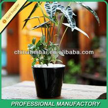 Most Popular Zinc Flower Planter