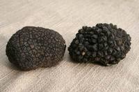 Fresh Black Truffle (Tuber aestivum)
