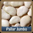 Lima Beans Jumbo