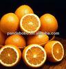 Manufacturers navel orange sweet organic fruit in factory price