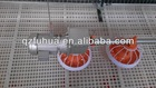 Fuhua good quality Automatic poultry farming system for Duck