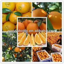 Good shape nice colour chinese navel orange fruit in factory price