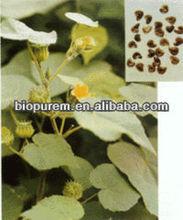 100% Natural Semen Abutili Extract 4: 1, 10: 1