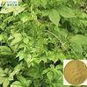 gynostemma pentaphyllum extract/ gynostemma tea teabags