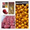 wholesize cheap navel oranges fresh citrus fruit