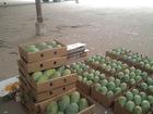 Import Pakistani Mangoes to USA