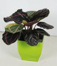 indoor decorate beauty plastic flower vase painting designs