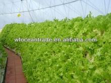 Soyabean Fatty acid oil ,Soyabean acid oil,Soya acid oil,Fatty Acid Mixture,Mixed Vegetable Acid oil,Factory hot sell