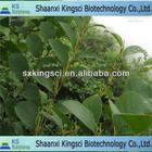organic resveratrol supplement/resveratrol 95%/giant knotweed extract bulk resveratrol