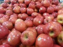 Fresh Red Fuji Apple for sale( crisp, juicy, high quality )